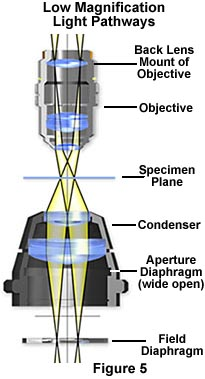 low magnification light pathways