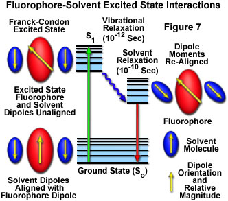 fluorescenceintro figure7